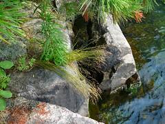 P1030615.jpg (airwaves1) Tags: 1000islands stlawrenceriver july282007 yeoisland