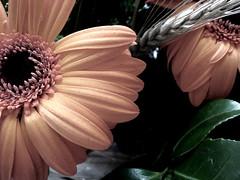 Flor sem saturação