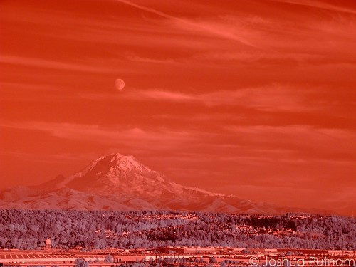 Un-processed Color IR (by joshua_putnam)