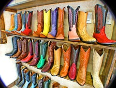 Boots through the peephole (Texas Finn) Tags: pink red brown black color green colors look leather yellow shop gold store cowboy texas tan style fuschia shelf explore western buy peek choice cowgirl vignette sneaky fit lewisville peeping teel westernboots goatroper diamondclassphotographer flickrdiamond amazingamateur colourartaward strapblue alligatordetail