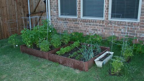 Garden @ 8 Weeks