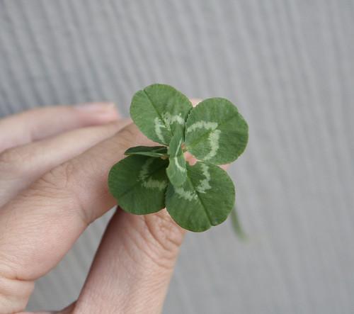 6 Leafed Clover!
