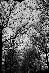 . (chichi banana) Tags: trees queens allee coronapark