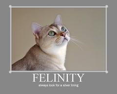 Oliver (rogersmithpix) Tags: cats pets poster fdsflickrtoys feline jesters supershot outstandingshots abigfave anawesomeshot impressedbeauty cwcc