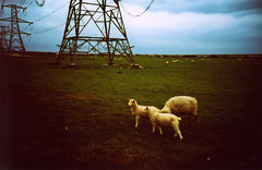 (Yellow Bear) Tags: sky copyright lca lomography mod shingle crossprocessing dungeness pylons vignetting allrightsreserved firingrange agfaprecisa100 verticallines clairegriffiths restrictedareas