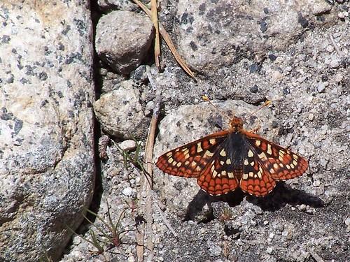 20070616 Butterfly
