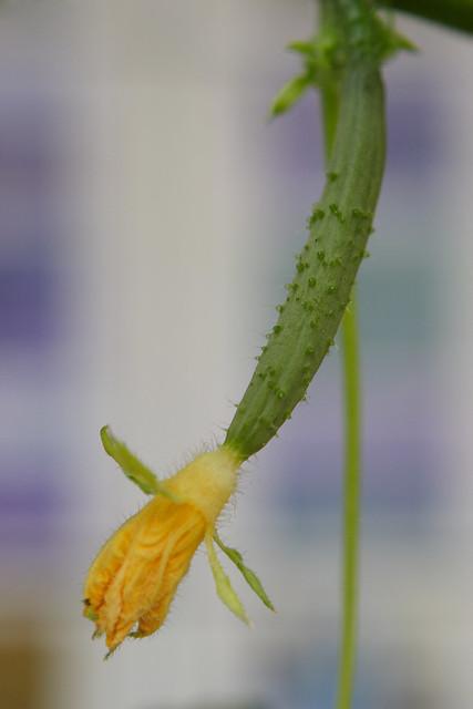 季節の作物