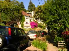 Berkeley hills