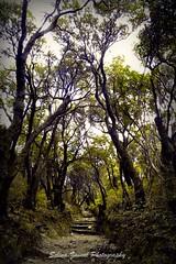 lost (Selinz) Tags: trees nature forest indonesia volcano bandung diamondclassphotographer flickrdiamond