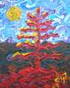 red fir