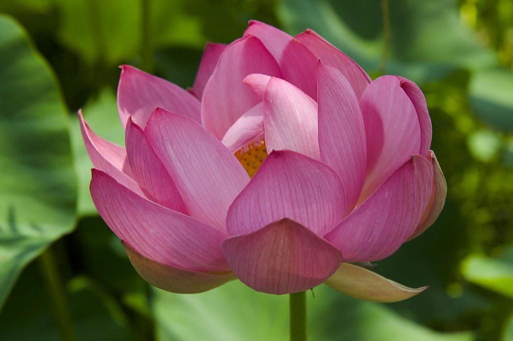 lotus 1 ©2007 RosebudPenfold