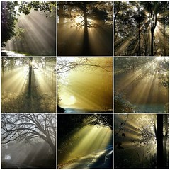 Sunbeams and Trees (algo) Tags: road light england sunlight forest photography fdsflickrtoys topf50 bravo topv1111 chilterns topv999 rays topf100 sunbeams 100f halton naturesfinest chilternhills wendoverwoods chilternforest 50f aplusphoto holidaysvacanzeurlaub 200750plusfaves