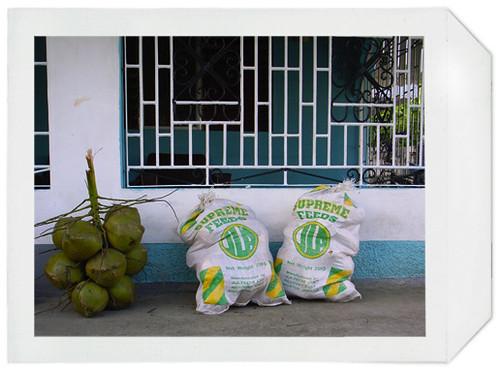 coconut-04