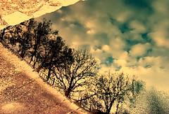 Something sad, may be... (Emilofero) Tags: wood reflection nature water forest bulgaria rodopi asenovgrad