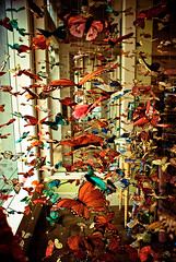1 Million Butterflies (GHD PHOTOGRAPHY & DESIGN) Tags: california summer shop photoshop butterfly fly flying store lomo lomography san colorful dof sandiego sony butterflies diego adobe alpha coronado a100 2007 lightroom dslra100 alphasony