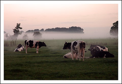 I Wanna Wake Up With You (buteijn) Tags: morning mist holland misty fog haze bravo utrecht cows herfst foggy nederland weiland koeien houten werkhoven ochtendmist abigfave radiationfog diamondclassphotographer grondmist iwannawakeupwithyou