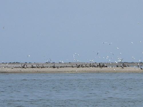 Birds ashore