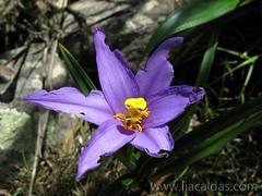 Flor / Flower