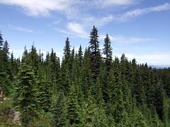 DSCF0603 (Bryan V) Tags: hiking edenpark hike mthood mounthood elkcove vistaridge cairnbasin wyeastbasin