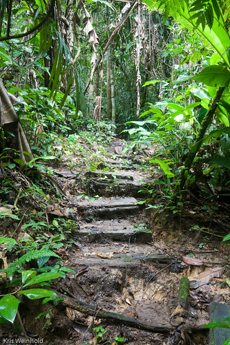 Stepped Path in the Amazon Rainforest