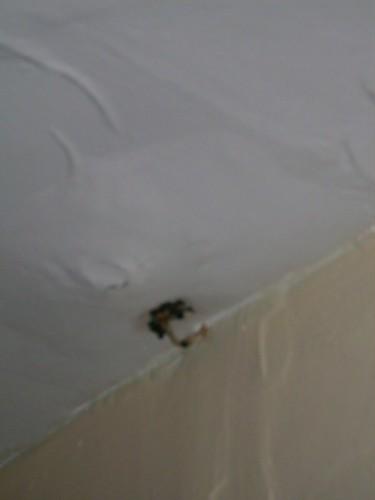 ceiling_mushroom.jpg