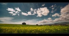 Los Royos II (muliterno) Tags: murcia campos losroyos