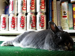 Tipsy (Itchy Feet in London) Tags: pet house cute rabbit green nose grey eyes legs head coke ears books bookshelf whiskers dietcoke medium stretched tipsy laying