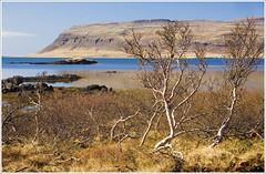 Iceland 2010. Westfjords. On the way to Latrabjarg. 3829. (Tiina Gill (busy)) Tags: landscape iceland westfjords goldstaraward yourwonderland