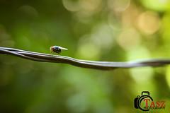 Fly 7D Test! (Tasz Strachan) Tags: insect fly jamaica flies taszphotography