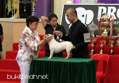 4th & 5th Utility Dog Club Championship Show