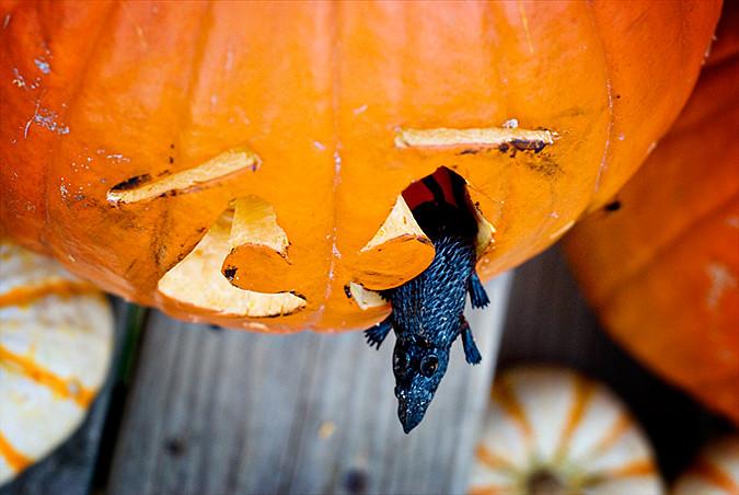pumpkin carving 2010 d