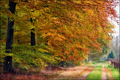 country road (heavenuphere) Tags: road autumn trees fall netherlands landscape vanishingpoint woods europe path nederland drenthe exloo 55250mm borgerodoorn
