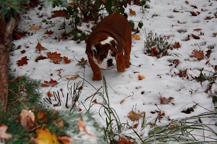 First snow 11-10 002