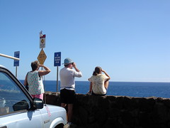Whale watching at Hawaii