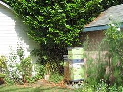 Beekeeping 2353