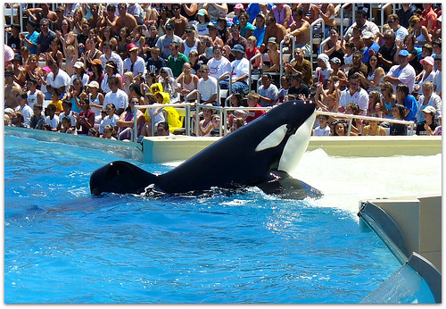 at Sea World in San Diego,
