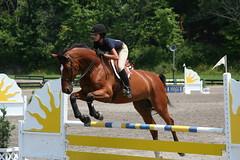 Hits Horse Jumping