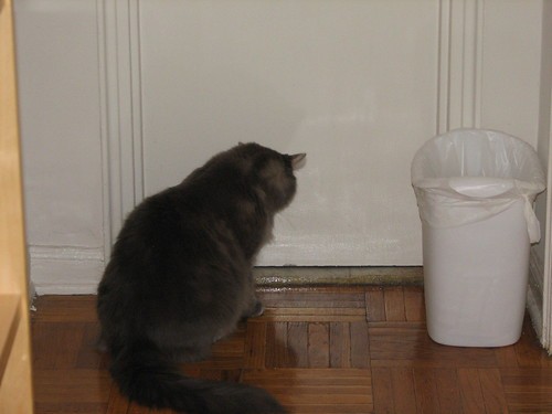 kuba checking things out