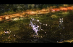 Splash (Pedro Rivera [SkYp3r] Photography) Tags: 2 macro up field photoshop canon eos rebel dof close bokeh depth xsi lightroom cs3