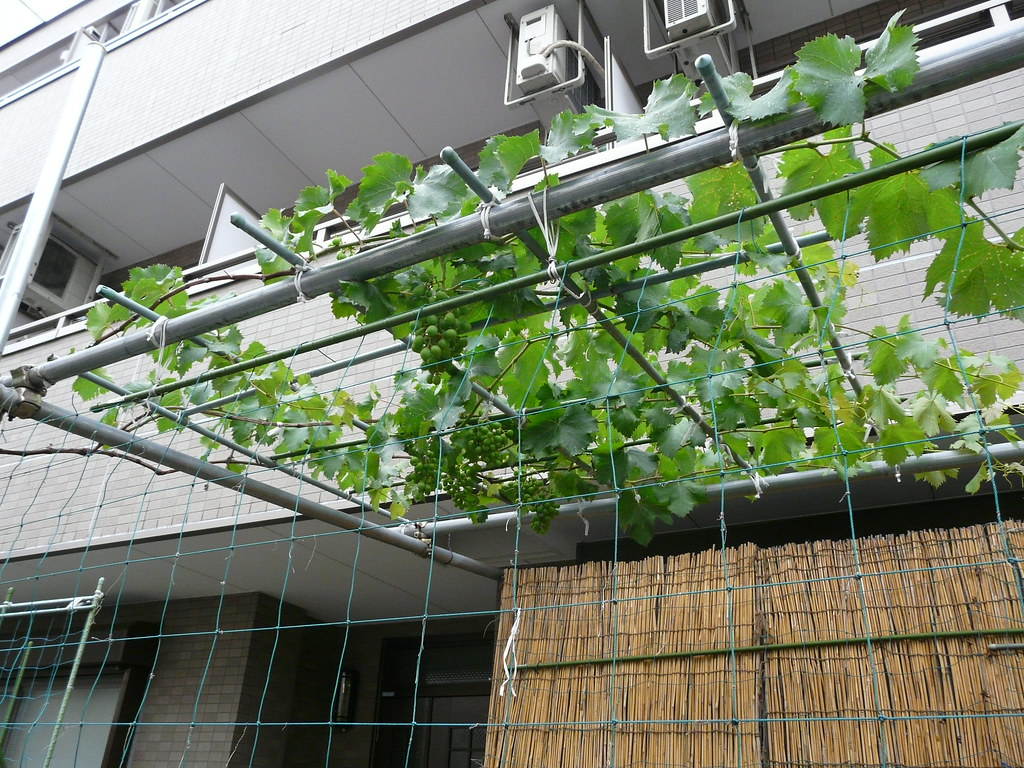 Apartment Entrance Garden + Grapes