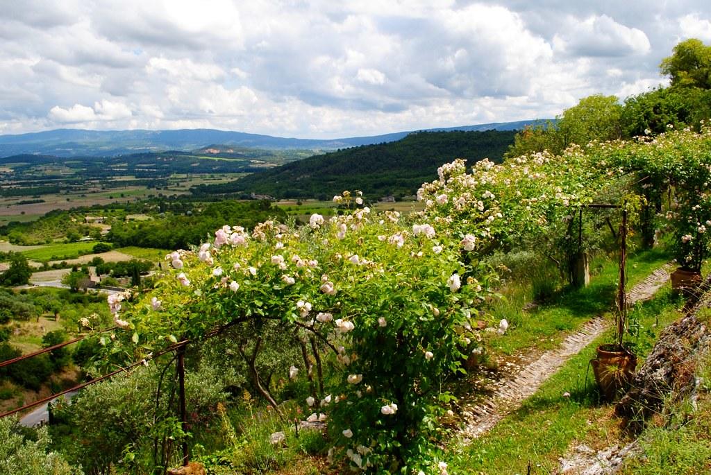 flower-archway path
