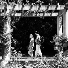 doubly framed... (...storrao...) Tags: people blackandwhite bw portugal gardens walking square pessoas nikon couple noiretblanc nb bn porto cropped casal jardins caminhando serralves pretobranco prgola d90 pergole roseiral storrao sofiatorro nikond90bw