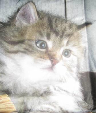 Yastık kılıfı kedi