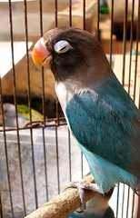blue summer orange hot bird closeup colorful leg beak feather parrot cage groggy tanakawho twtmesh110802