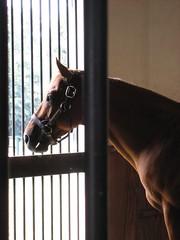 Artsy (spader) Tags: horses cypress threechimneys sd600