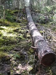 log roll (offonmars) Tags: alberta canadianrockies johnstoncanyon
