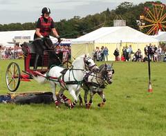 Stunt Ponies