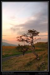Reaching Out (Sean Bolton (no longer active)) Tags: sunset tree castle grass wales rural landscape countryside carmarthenshire scenery sheep cymru ruin fortification fortress blackmountain wfc carregcennen llandeilo cadw dyfed seanbolton welshflickrcymru ffotocymrucouk ffotocymru deheubarth castellfarm