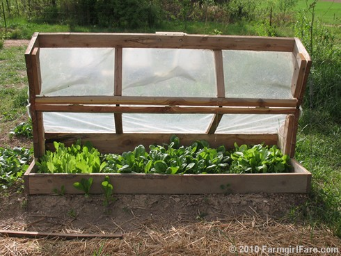 Amish Cold Frame  3