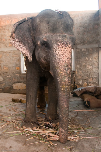 RYALE_Elephant_Village-29